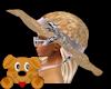 !A! Tropics Hat