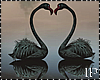 Flamingo Love Black