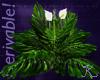 Tropical, Broad Leaf