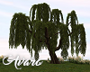 Large Willow Tree