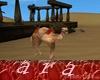 camello movimiento accio