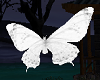 White Flying Butterflies