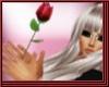 Apology Rose