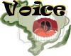 (PN) Voice