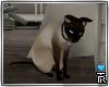 7am; animated kitty