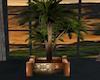 Sunset Royal Palm