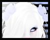 N: Snowie Head Roses