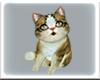 ! CAT SHOULDER PET