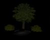tree 2 with three shrubs