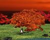fall romance tree swing