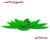 Lotus Toxic Vert