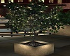 Rooftop Lighted Tree