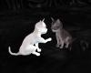 {r} Dark Shadows Kittens