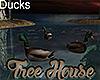 [M] Tree House Ducks