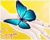Blue Butterfly x