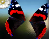 admiral butterfly wings