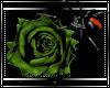 (D)Death Rose