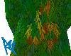 Faols Foliage
