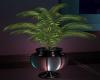 Pianeta Plant 2 KK