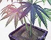 Neon Bunker Weed Plant