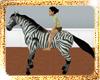 !(ALM) ZEBRA HORSE