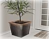 [Luv] Plant 4