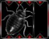Drax bug 6
