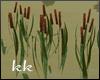 [kk] Fall  Lake Cattails