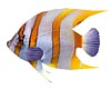 Anim.Under Sea fish 3p/3