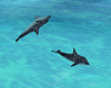 Beach  Dolphins (anim)