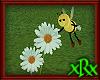 Bee Daisy 1