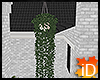 iD: DMac Hanging Ivy