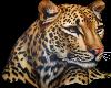 Beautiful Jaguar Head
