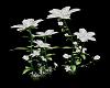 White Pose GardenFlowers