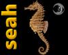 [seah]Seahorse Particles