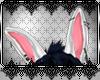 *D™Pure Rabbit Ears M/F