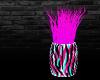 Neon Zebra Plant