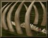Bones of the Great Wyrm