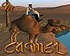 [M] Camel