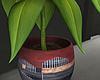 House PLant  Exclusive