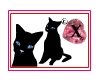 seXie -- Black Kitty