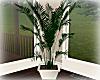 [Luv] Plant