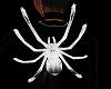 Spider on Back Ani