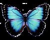 Bl Butterfly Pet