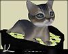 🅺 T-Dot Anim Kitten