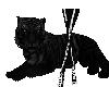 The black tiger pet