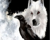 Raven & Wolf Pic.