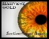 >Harvest Gold Eyes<