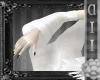 + Light Kimono Sleeves +