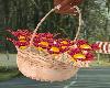 Retro / Basket